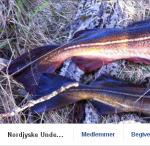 NordjyskeUndervandsJaegere
